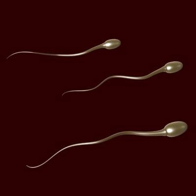 sperm cells 3d model