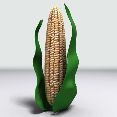 ma cob corn