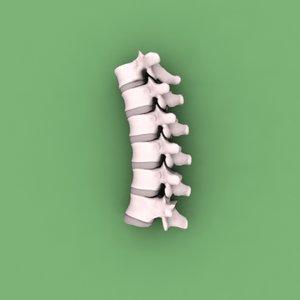 human vertebrae 3d model