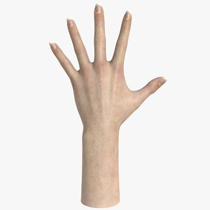 realistic female hand modeled 3d model