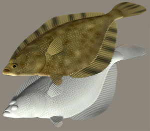 3ds max starry flounder numagarei