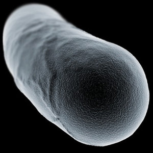 microscopic bacillus bacterial cell 3d model