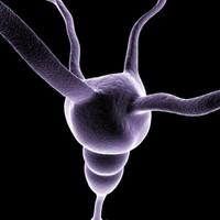 neuron cell 1 3d model