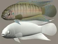 chinese paradisefish tougyo 3ds