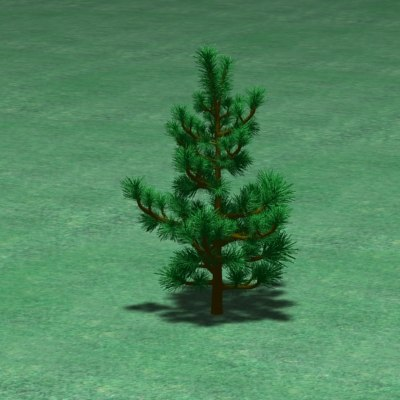 jack pine tree 3d 3ds