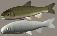 pacific redfin marutaugui 3ds