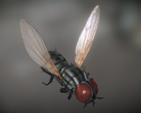 Animated Housefly