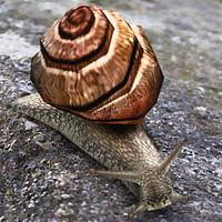 Snail 01
