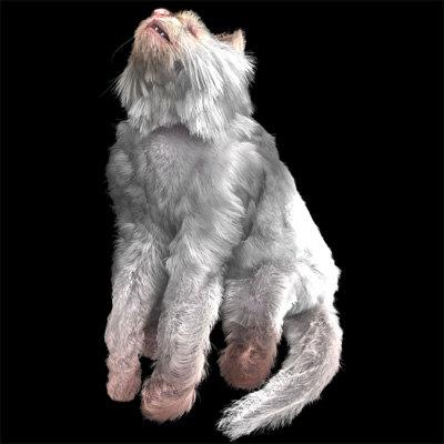 persian cat hair 3d model