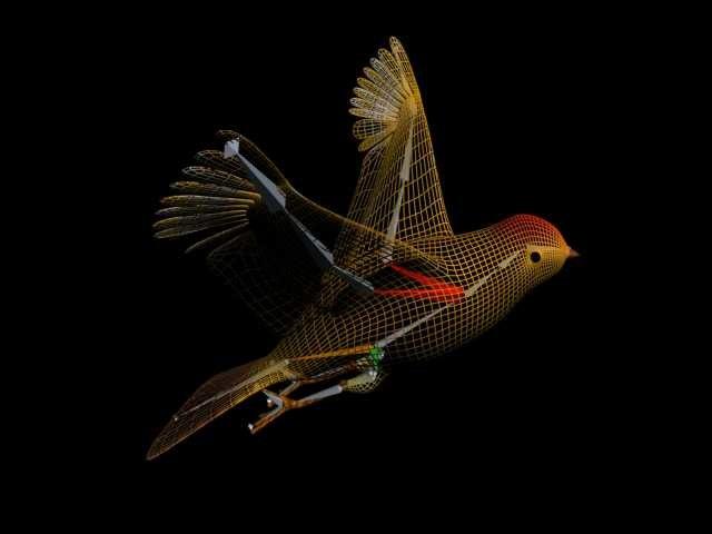 bird animation 3d model