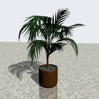 maya indoor potted tropical plant