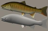 Cherry salmon (Satukimasu)