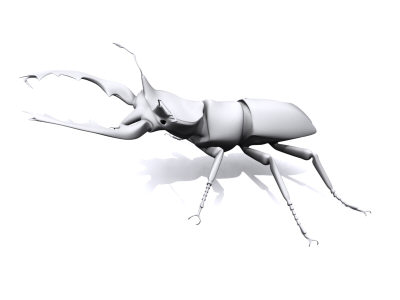 3d model beetle stag