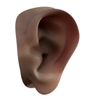 An anatomically correct ear