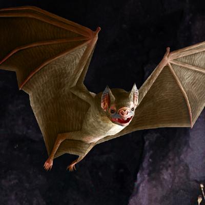 vampire bat 01 3d model