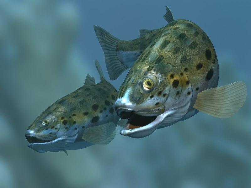 rainbow trout fish 3d max