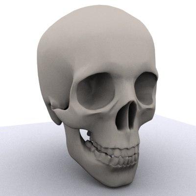 skull jaw teeth 3d model