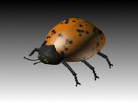ladybird.zip