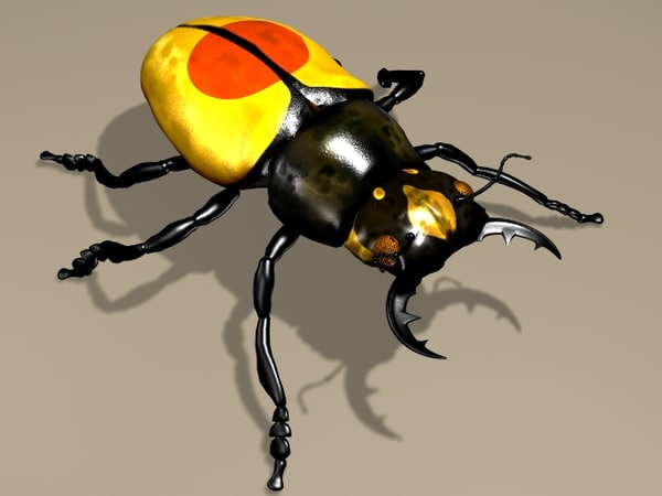 insect beetle max
