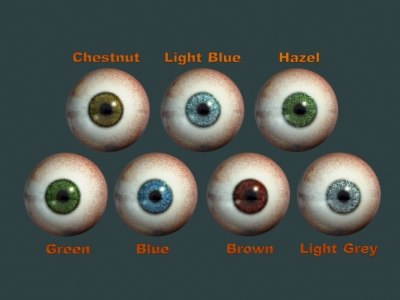 eyes pupil 3d model