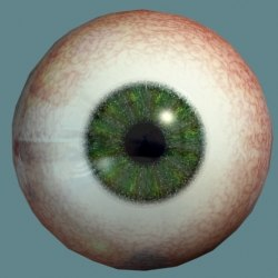 eyeball hazel eye 3d model