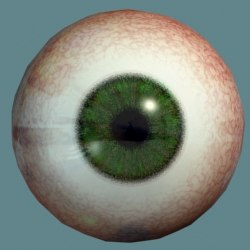 eyeball green eye 3d model