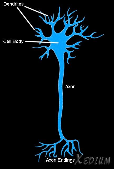 nerve cell 3d model