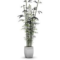 bamboo_MAX