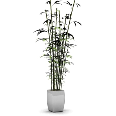 stylish bamboo plant 3d model