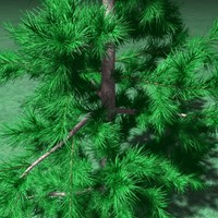 large_pine01