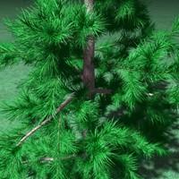 pine tree 3d 3ds