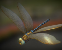 Animated Dragonfly