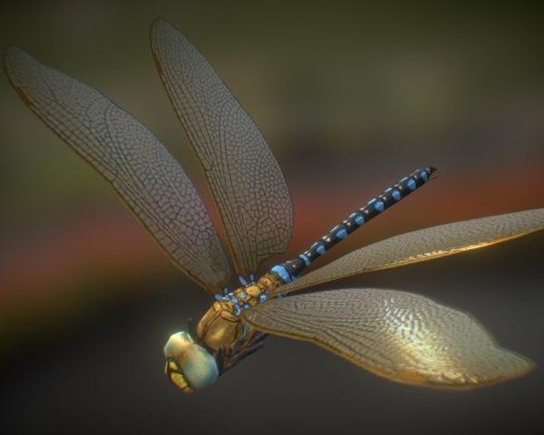 dragonfly 01 3d model