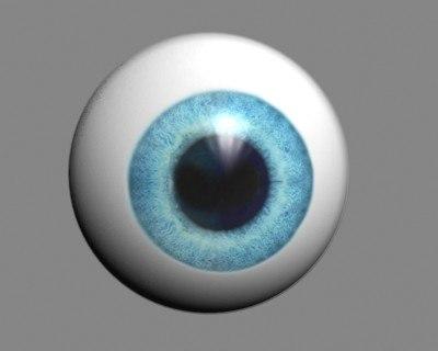 3d model of eye