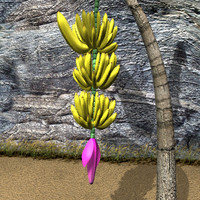 3d banana palm tree model