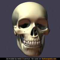 Detailed Human Skull 3d Model