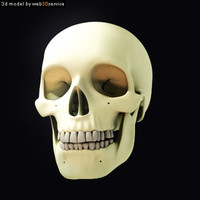 Advanced Human Skull 3d model
