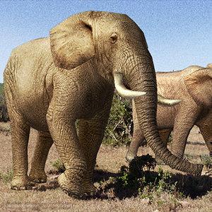 3d elephant 01