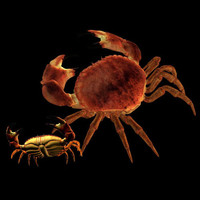 aquatic crab pzcrab 3d model