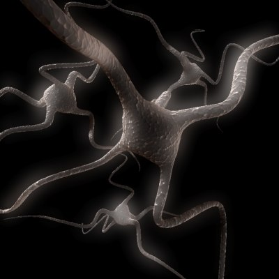 max brain cells