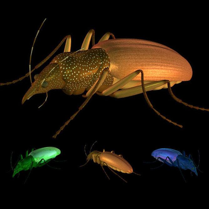 beetle pzbeetle 3d model