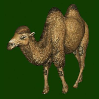camel poser pz3