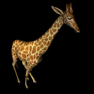 giraffe poser neck pz3