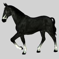 poser horse gelding