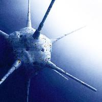 free waterbomb 3d model