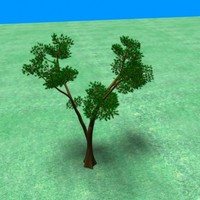 bonsai pine tree 3d model