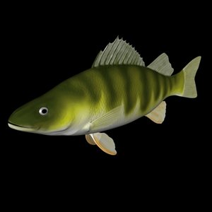 yellow perch 3d 3ds