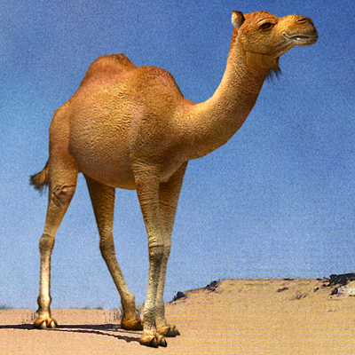 3ds max camel 01