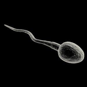 animation sperm 3d model