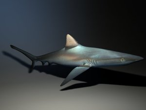 simple shark ma